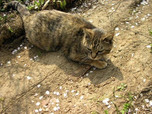 Cat08011