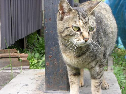 Cat08013