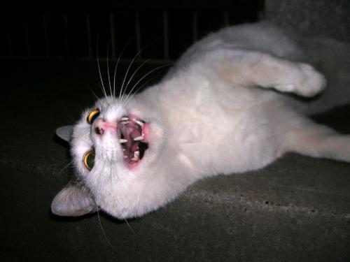 Cat08131