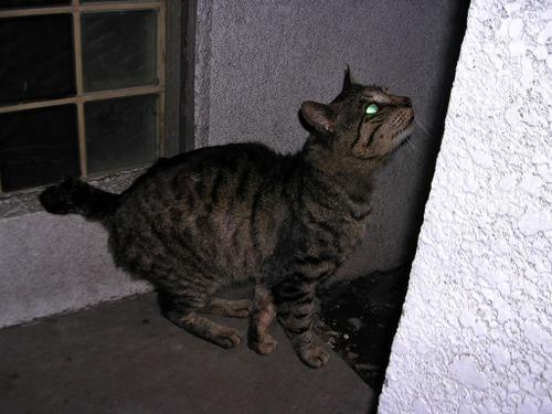 Cat0815