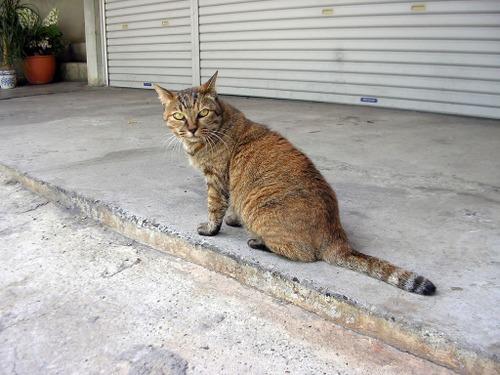 Cat0831