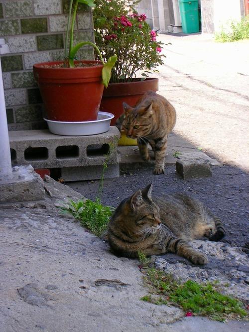 Cat09031