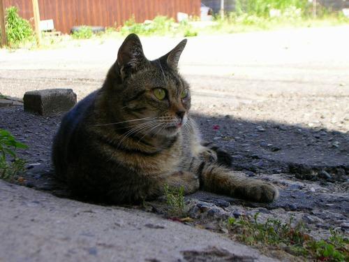 Cat09032