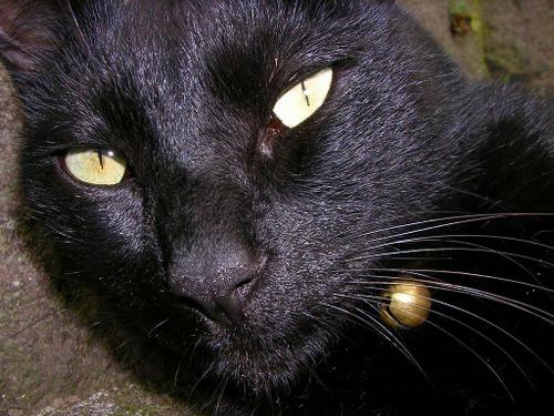 Cat09192