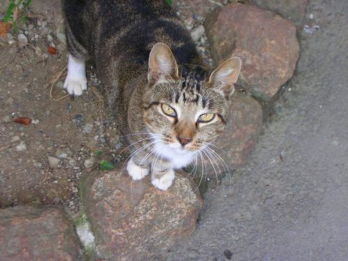 Cat0925