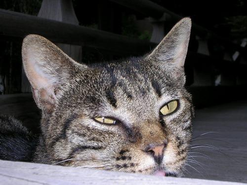 Cat0314