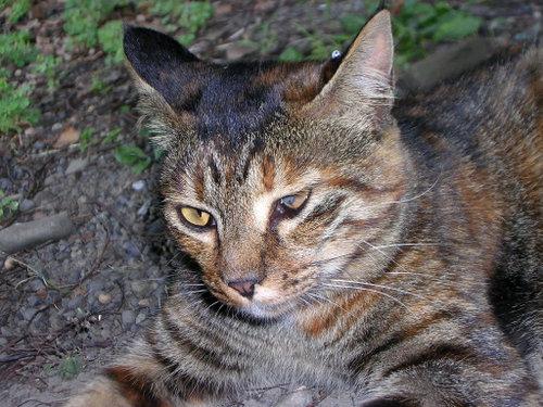 Cat0319