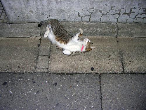 Cat0323