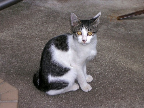 Cat0411