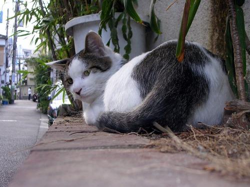 Cat04131