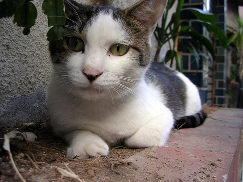 Cat04132