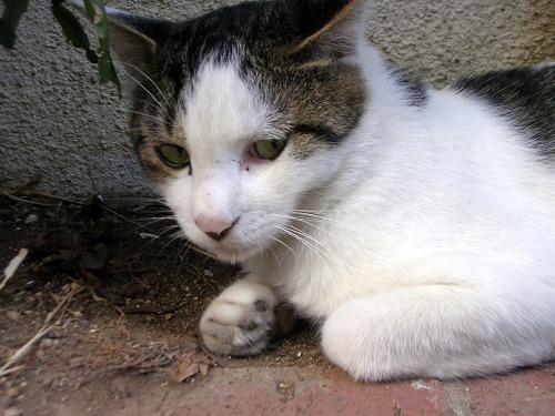 Cat04133