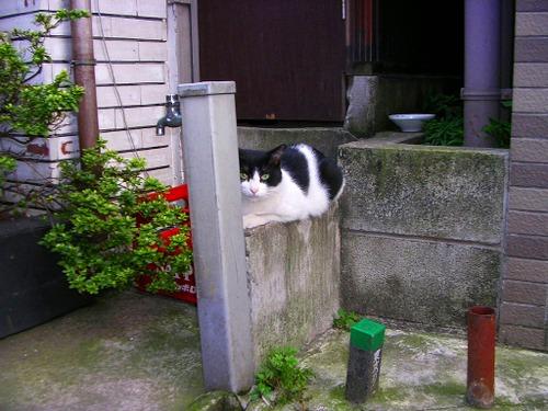 Cat04231