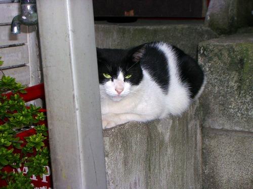 Cat04232