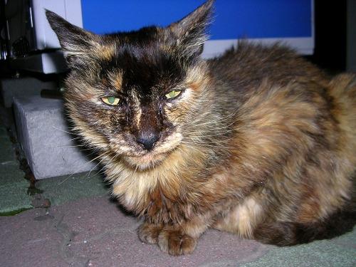 Cat0511