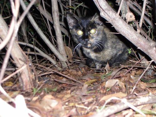 Cat0514