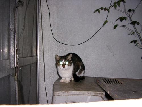 Cat0516
