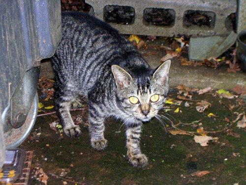 Cat05301