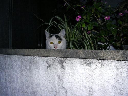 Cat06111