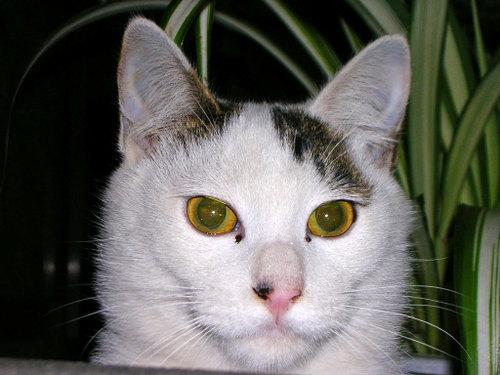 Cat06112