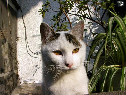 Cat06131