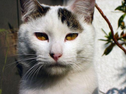 Cat06132