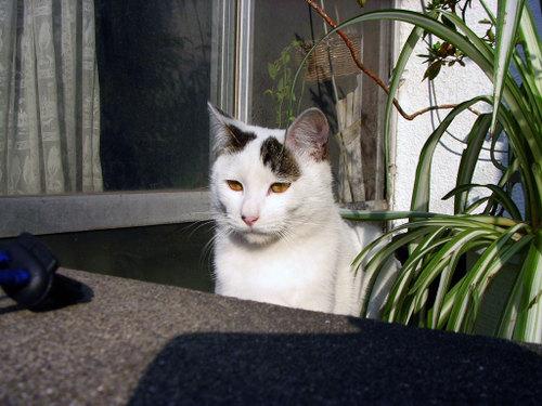 Cat06151