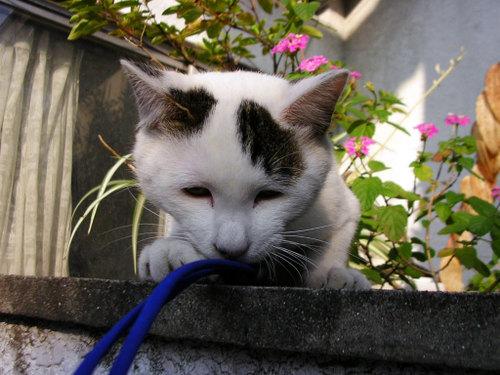 Cat06152