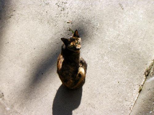Cat06202
