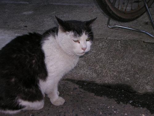 Cat0625