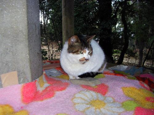 Cat06291