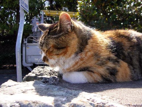 Cat07131