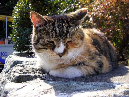 Cat07132