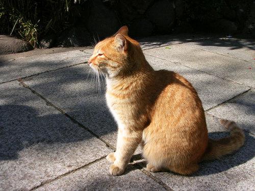 Cat0717