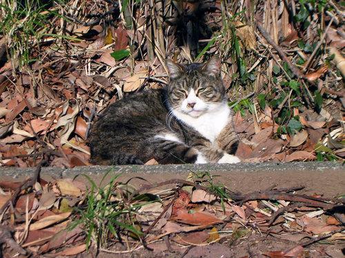 Cat0718
