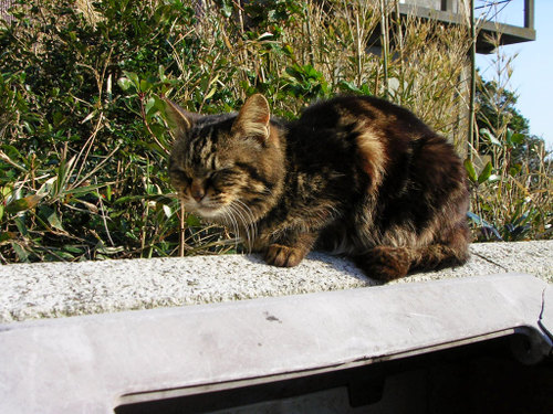 Cat07252