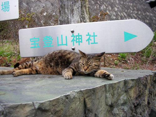 Cat07271
