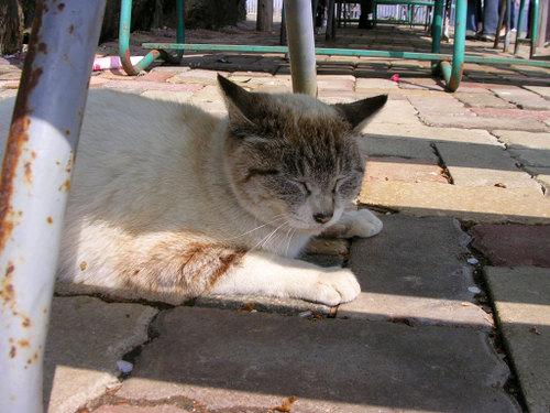 Cat07301