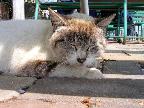 Cat07303
