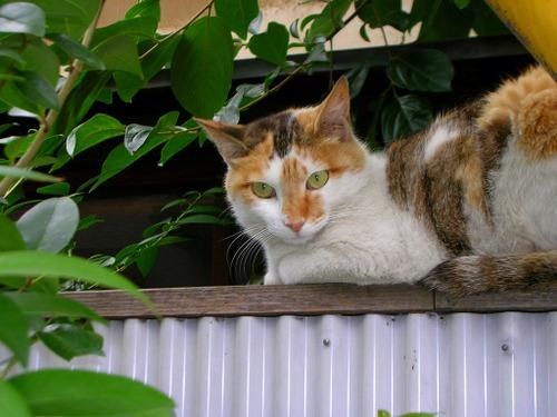 Cat_017_1