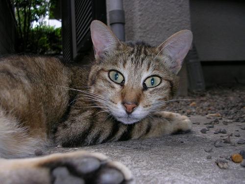 Cat_03_12_1