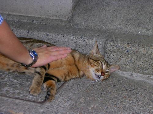 Cat_03_15_1
