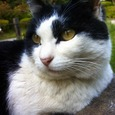 中野区松が丘の猫