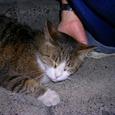 豊島区千川の猫