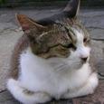 千代田区九段南の猫