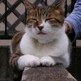 新宿区白銀町の猫
