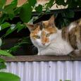 新宿区岩戸町の猫