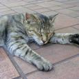 中野区中野の猫