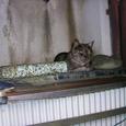 豊島区南長崎の猫