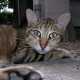 豊島区要町の猫